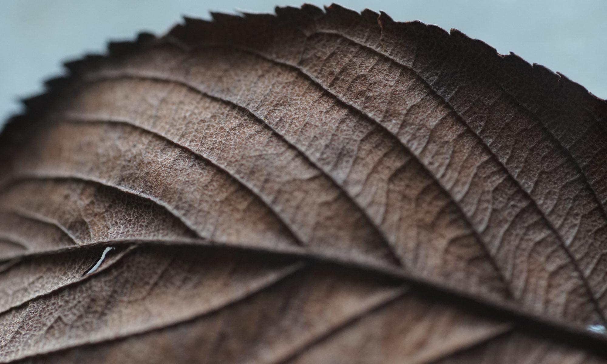 Leaf by Hiroyuki Igarashi via Unsplash